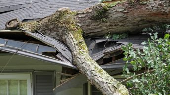 Umgestürzter Baum auf Hausdach