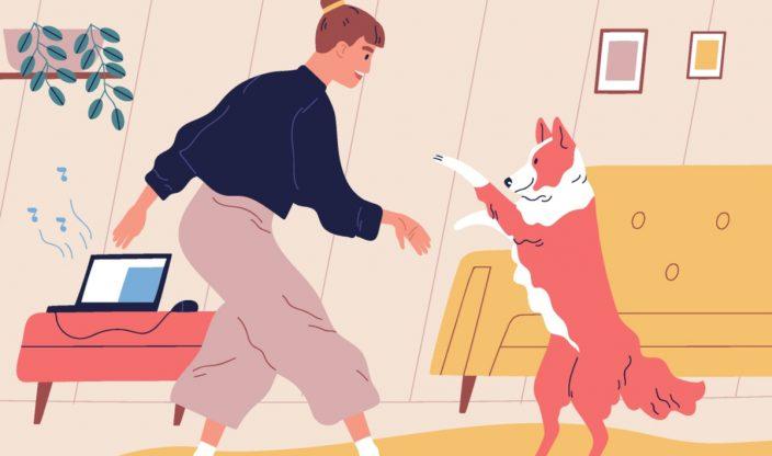 Hund Einschläfern kosten