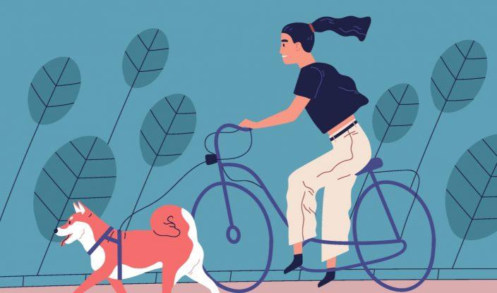 Hund Kastrieren kosten